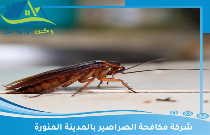 شركة مكافحة الصراصير بالمدينة المنورة